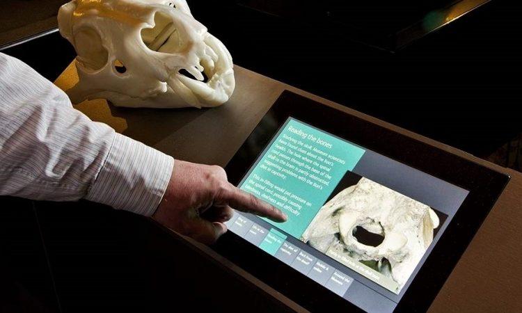 natural-history-museum-treasures-2